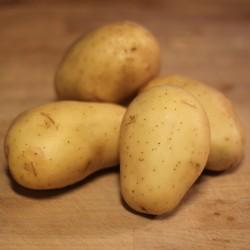 Pomme de terre anabelle 1 kg
