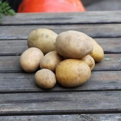 Pomme de terre grenaille agata 1 kg