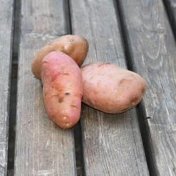 Pommes de terre Désirée BIO 500 gr - Le Potager du Télégraphe