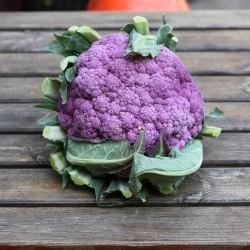 Chou fleur violet - Le Potager d'Olivier