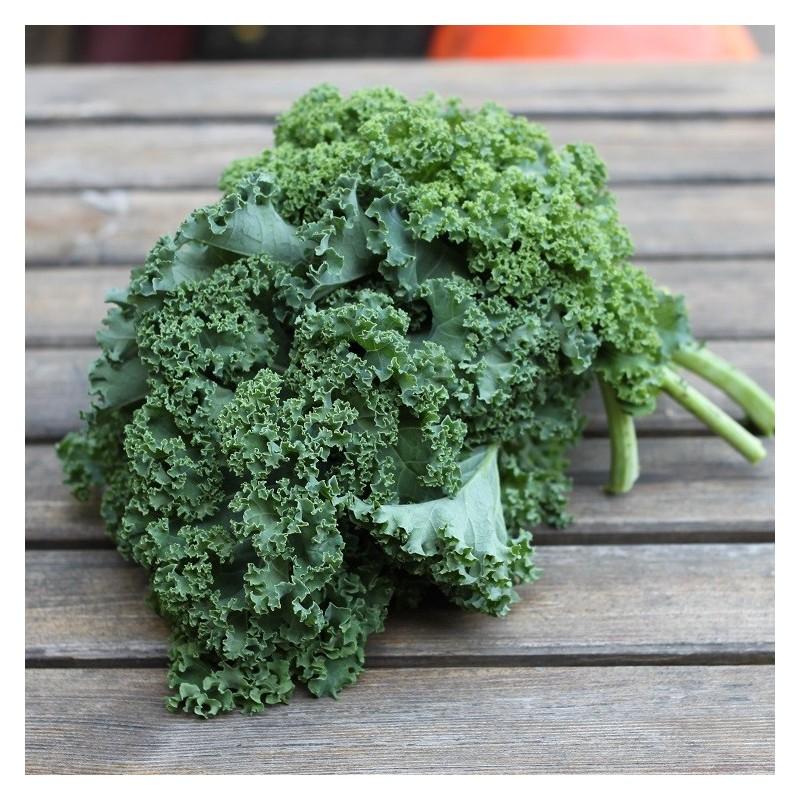 Chou de Kale vert ~250g - Le Potager d'Olivier